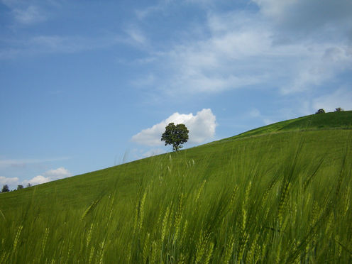 Trees_crops_flickr_fabio_strozzi