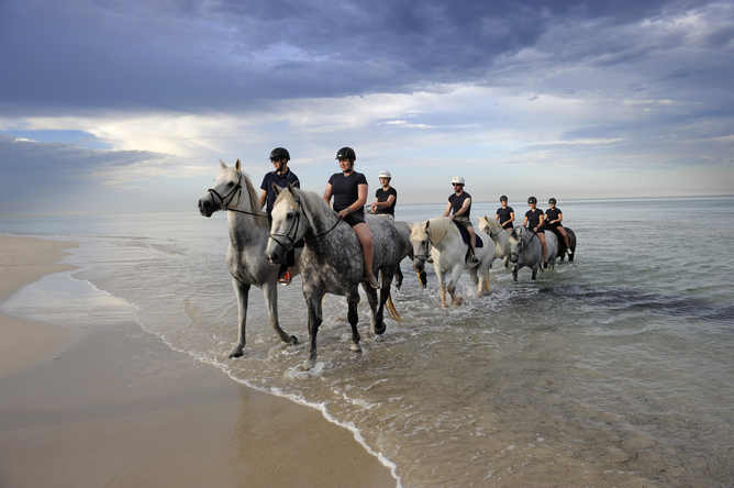 South Australia police officers take police horses for an early morning swim ahead of a hot day. AAP/David Mariuz