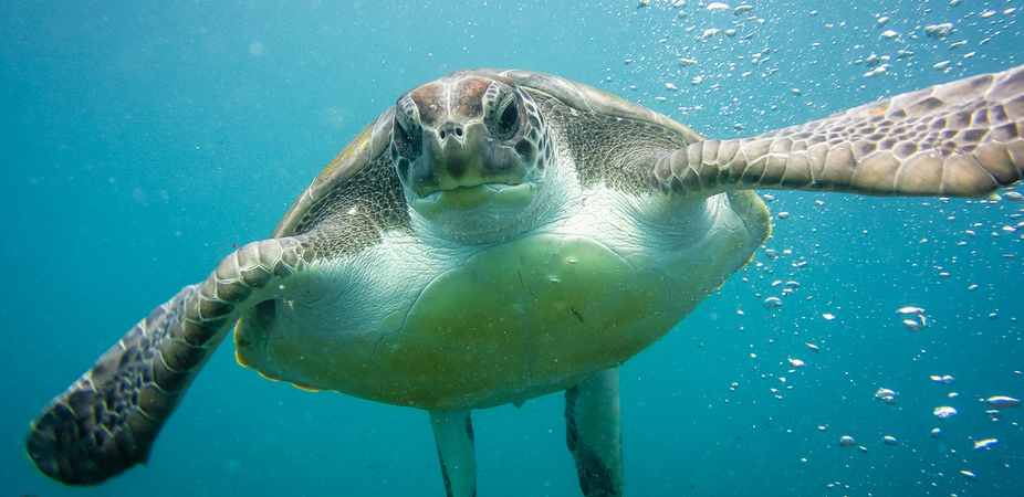 Sea turtles and climate change are not a good mix. Photo: SteFou