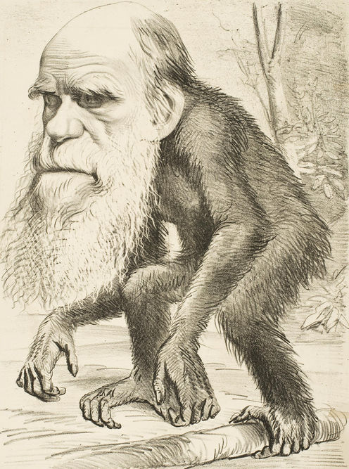 Editorial_cartoon_depicting_charles_darwin_as_an_ape__1871_