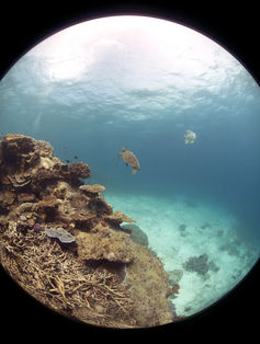 Internet users will be able to immerse themselves in the world's largest coral reef system. Catlin Seaview Survey